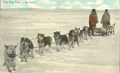 Photograph of postcard of prize dog team in the Arctic
