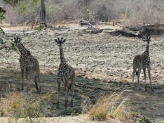 Zambia03SouthLuanga135