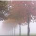 Morgennebel - misty morning