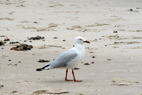 Seagul at Lennox Head by Espen Klem