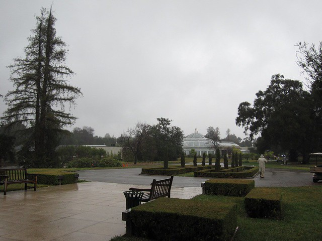 Huntington Library - Rain