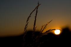 Coucher de soleil / IMG_3508
