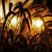 sunset through the grasses... by mocachip