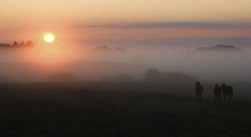 morning light horses mist fog sunrise nikon lithuania blueribbonwinner d80 anawesomeshot rambynas