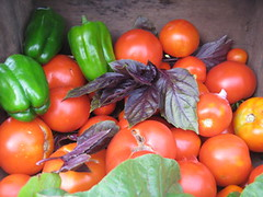harvest August 09