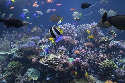 fish aquarium aquariums atlantismarineworldaquarium