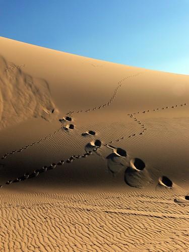 Footprints - Stockton Sand Dunes