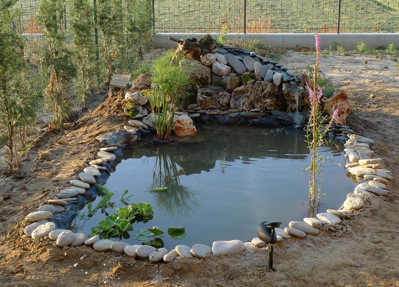 Leggi argomento la storia del laghetto for Piante da laghetto ossigenanti