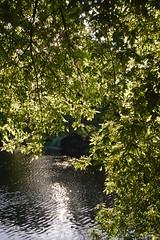 UC DAVIS Arboretum, Davis CA