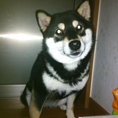 闇の中でホームベーカリーを見つめる犬の瞳は怪しく輝く