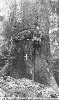 Men sitting in giant spruce tree near Seaside, Oregon