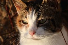 grann katt