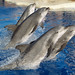 Dolphins, Seals & Sea Lions 6/21/09
