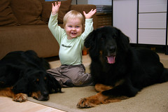Arttu and the dogs