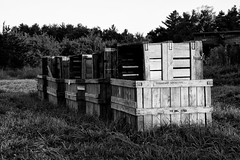 Boxes at the Orchard