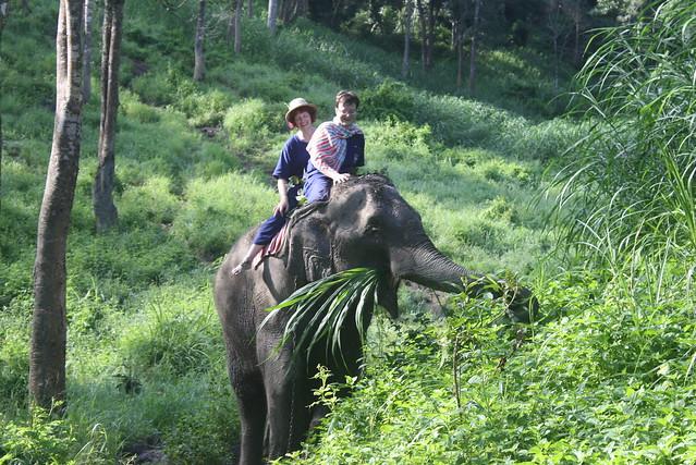 Elephant Snack
