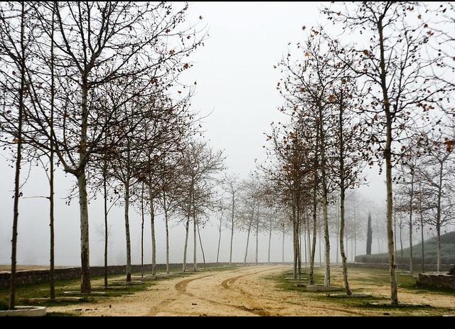 Path to cemetery  //  Camino al cementerio