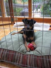 Cesar Dog Crate Training