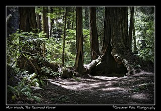 Muir Woods: The Redwood Forest
