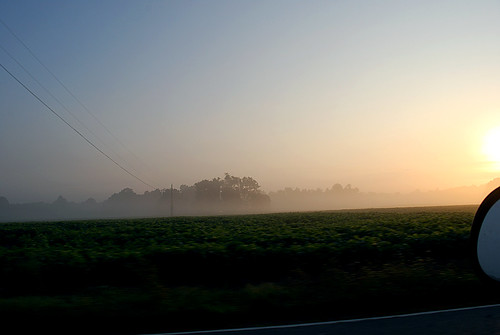 field fog sunrise virginia nikon day farm daily every thesouth 365 soybean everyday d60 nikond60 willieleejones