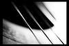 stretched strings - b/w by M. Grunwald