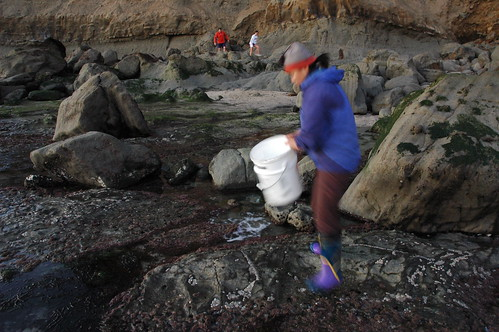 Biologist studying the ocean among the rocks, Pillar Point, sample collection bucket, tourists, near Mavericks, California, USA by Wonderlane