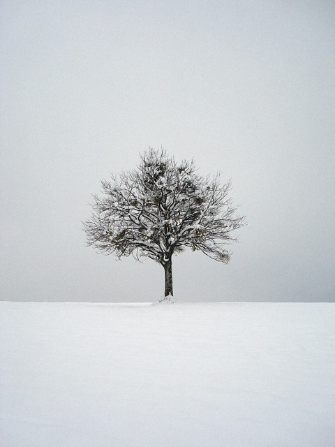 Lonely Tree by Santo Rizutto