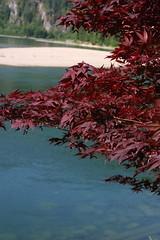 07/03: Pretty leaves