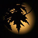 maple leaf in moonlight