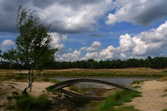 footbridge by a pond in the heath