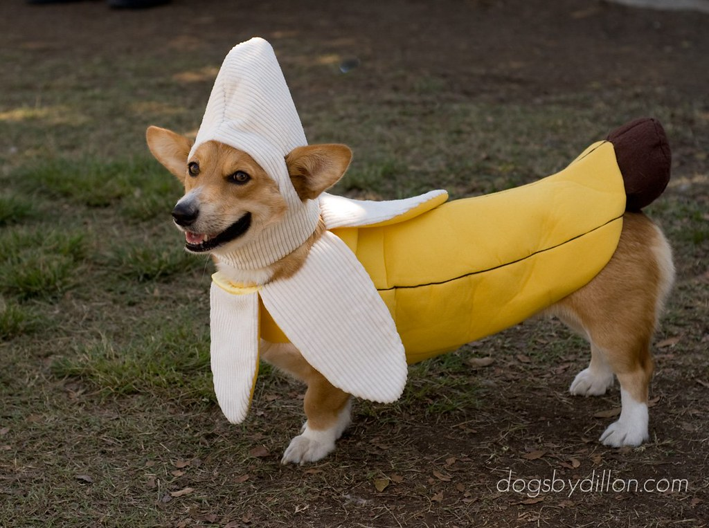 Corgi Hot Dog Costume