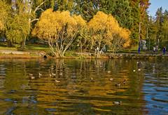 Greenlake Autumn