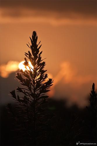 sunset mobile weed alabama sigma150