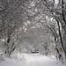 Small photo of Winter