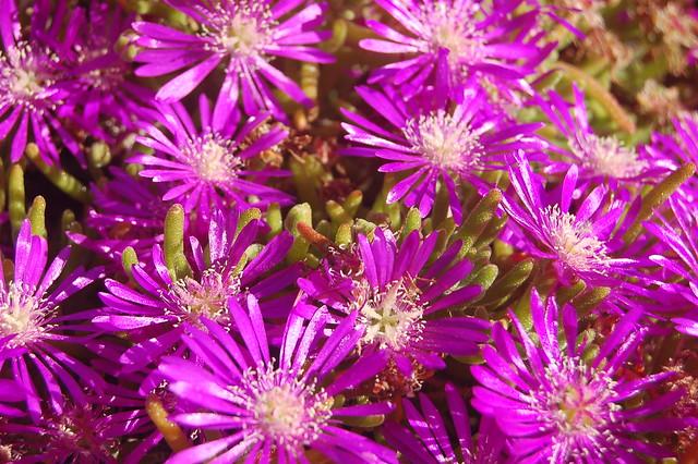 garden flowers | Flickr - Photo Sharing!