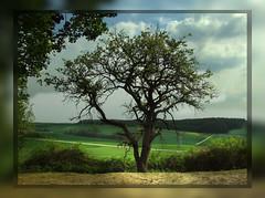 Baum neben Autobahn