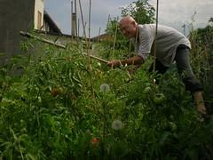shrub(0.0), garden(0.0), soil(0.0), agriculture(1.0), farm(1.0), flower(1.0), field(1.0), gardener(1.0), produce(1.0), food(1.0), farmworker(1.0), crop(1.0), plantation(1.0),