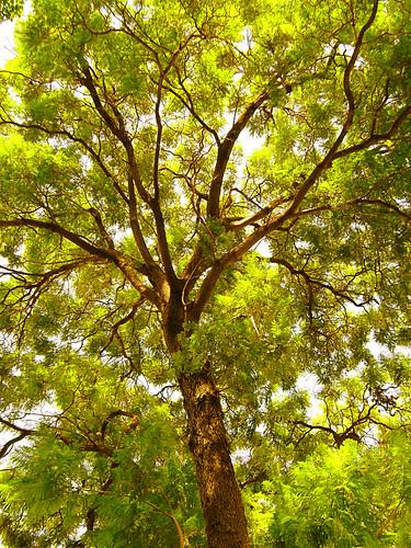life tree arbol pretty little raygun thebirdandthebee