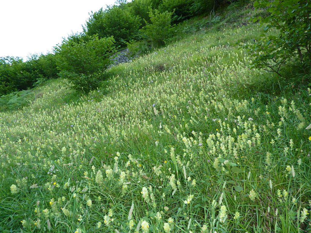 Image De Parterre De Fleurs vallon du lavedan - parterre de fleurs jaunes | tapis de rhi