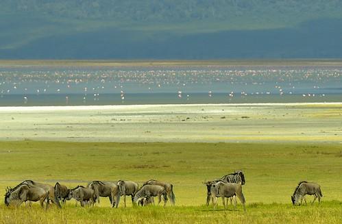 tanzania ngorongoro africanlandscape africanscenery