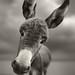 Hey There by Ben Heine