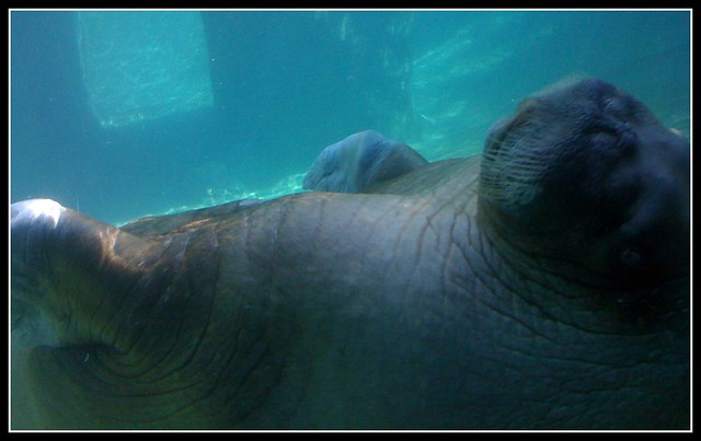 Point Defiance Zoo And Aquarium Flickr Photo Sharing