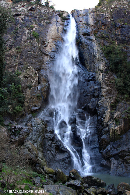 Ellenborough Falls - Bulga Plateau, Elands,NSW