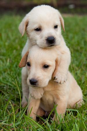 Puppy Totem