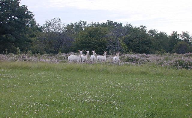 Naturally White Site Www Robinsonus Com