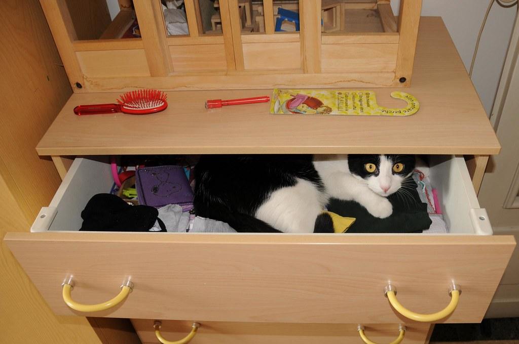 Tommy gatto da cassetto