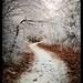 walking through the white by ~~aurora~~