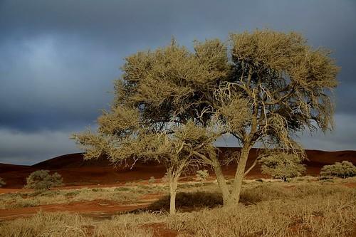 "africa blue orange color sunrise de landscape sand colours desert african dunes dune vivid paisaje paisagem colores ciel afrika nuage paysage der landschaft namibia duinen paesaggio sanddunes africain dune7 sossusvlei namib duin 여행 deadvlei namibie dune45 namibië 아프리카 сафари namibsky 纳米比亚 ""república τησ ναμίμπια ナミビア 나미비아 намибия σαφάρι αφρικήσ アフリカのサファリ l'afric ""sanddüne namib"" sandcurves ""namibnaukluftpark"" ناميبيا namibia"" नामीबिया নামিবিয়া"