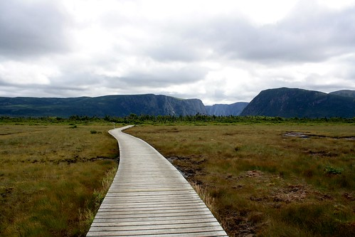 Path on the bog