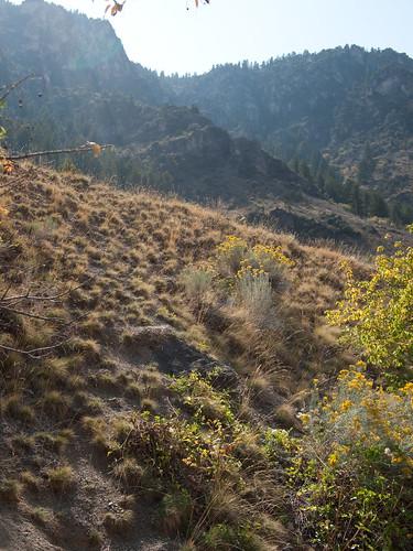 morning summer mountain nature backlight sunrise utah desert olympus canyon lensflare backlit logan logancanyon ep1 digitalpen cachevalley